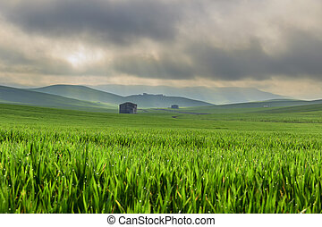 Hilly landscape with corn field.