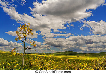 Hilly landscape with fields. Italy