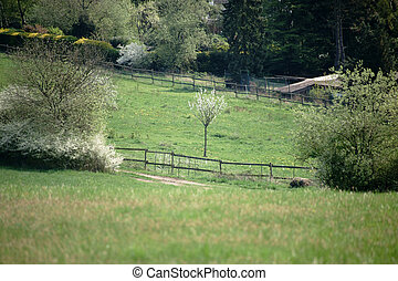 Hilly landscape with meadow and pasture fence