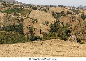 The hilly landscapes of Ethiopia near Wonchi creator lake area.