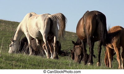 Hilly Pastures - Beautiful horse on pasture waving tails...