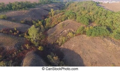 Hilly ravine with autumn trees, bushes and grass. Aerial...