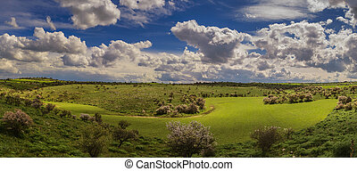 Hilly spring:wheat fields. Apulia.