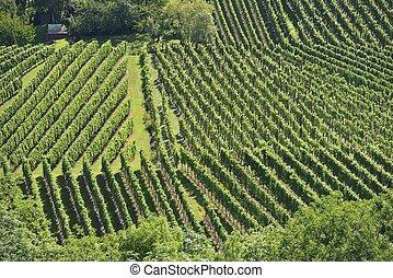 hilly vineyard #10, Stuttgart