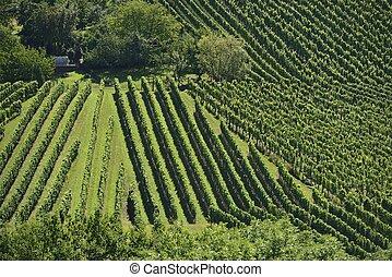 hilly vineyard #11, Stuttgart