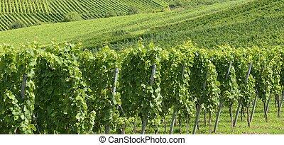 hilly vineyard #12, Stuttgart