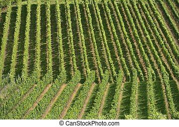 hilly vineyard #13, Stuttgart