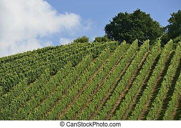 hilly vineyard #14, Stuttgart