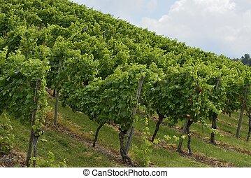 hilly vineyard #2, Stuttgart
