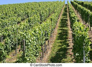 hilly vineyard #4, Stuttgart