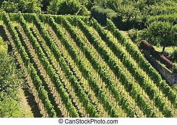 hilly vineyard #5, Stuttgart
