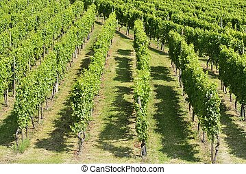 hilly vineyard #6, Stuttgart