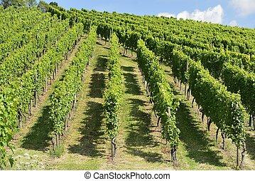 hilly vineyard #7, Stuttgart