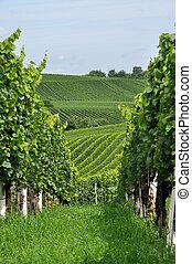 hilly vineyard #9, baden