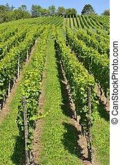 hilly vineyard #9, Stuttgart