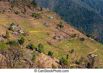 himalaya, riz, terrasses, collines