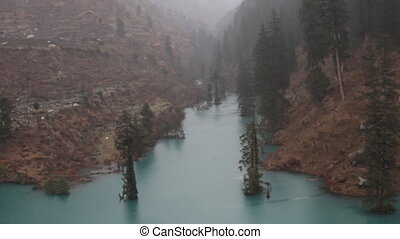 Himalayan firs and Himalayan spruce in lake. Flooded forest...