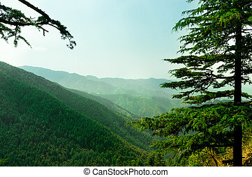 himalayan range in shimla covered with trees