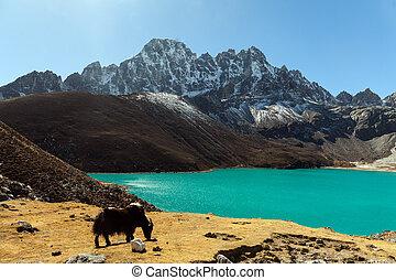 himalayas., gokyo, ri, berge, von, nepal, schneebedeckte , hoch, spitzen, und, see, not, weit, von, everest.