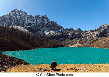 himalayas., gokyo, ri, góry, od, nepal, śnieg zaległ, wysoki, szpice, i, jezioro, nie, daleki, z, everest.
