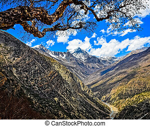 Himalayas mountains peak and tree