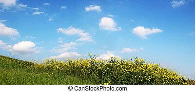 himmel, græs, -, vid