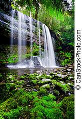 himmel, rainforest