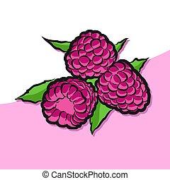 hindbær, vektor, farvet, artwork