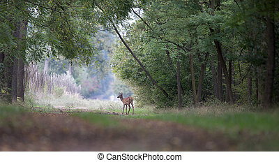 Hinds standing in forest