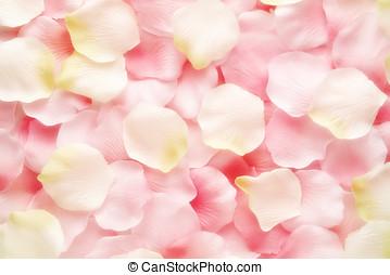 hintergrund, beschaffenheit, von, rosa, und, weiße rose, blütenblätter