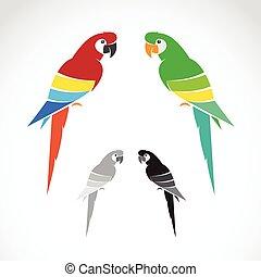 hintergrund., bild, vektor, weißes, papagai