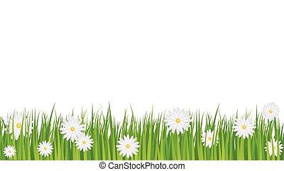 hintergrund, gänseblümchen
