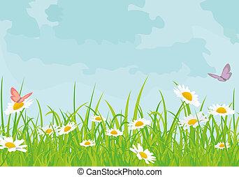 hintergrund, gänseblumen