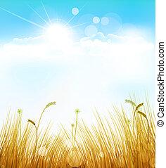hintergrund, gras, herbst