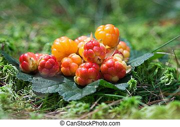 hintergrund, holz, grün, (cloudberry), wild, vegetatives , ...