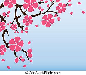 hintergrund, mit, blühen, sakura