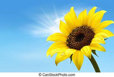 hintergrund, mit, sonnenblumenfeld, aus, bewölkt , blaues,...