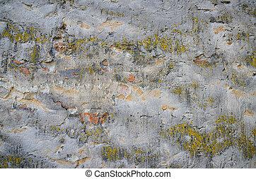 hintergrund, von, a, grungy, graue , zement, wand, mit, moos