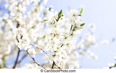 hintergrund, von, frühjahrsblumen