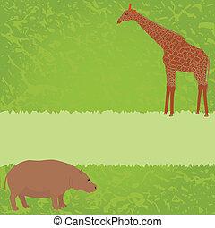 hipopotam, żyrafa, zielony, karta