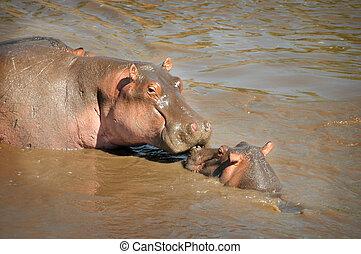 hippopotame, maman bébé, baisers