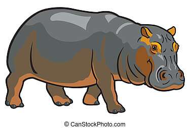 hippopotamus amphibius,africa animal,side view image...