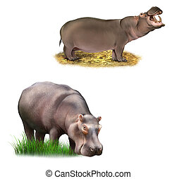 hippopotamus with clipping path, Eating grass Isolated illustration on white background.