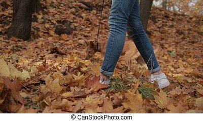 Hipster girl taking dog for walk in autumn