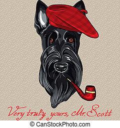 hipster, vector, terrier, perro, escocés