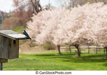 maison fleur arbre n rose fleur entiers id photos de stock rechercher des. Black Bedroom Furniture Sets. Home Design Ideas