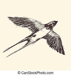 hirondelle, gravé, oiseau, croquis, illustration