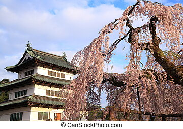Hirosaki castle and cherry blossoms