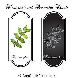 hirta, jardín, spurge, asthma-plant, o, euphorbia