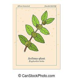hirta, planta, jardín, spurge, asthma-plant, medicinal, o,...